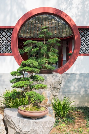 tradition: Bonsai tree in front of a white wall Stock Photo