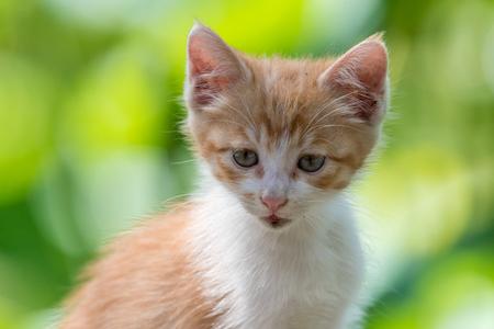 Ginger kitten in a garden