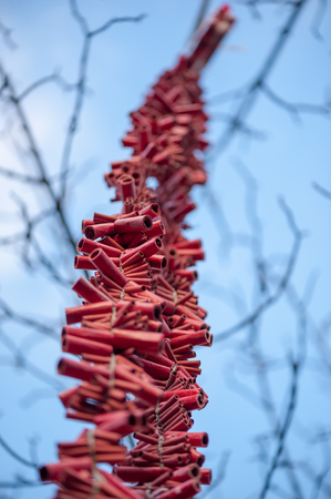 Stripe of red firecrackers hanging in a tree against blue sky for the chinese new year