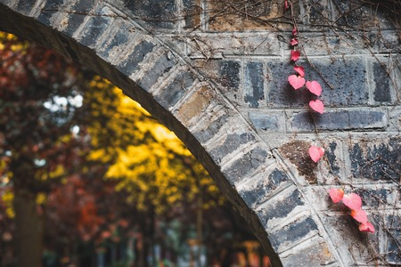 Heart shaped leaves on a brick wall with autumn tree in the background