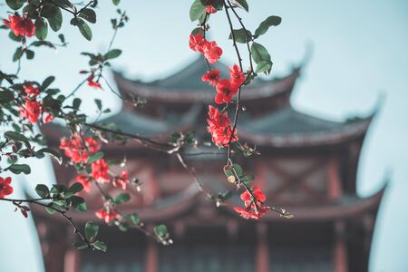 Red flowers in a tree against defocused pagoda in China