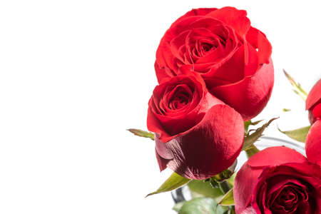 Red rose flowers close-up view isolated on white background 免版税图像