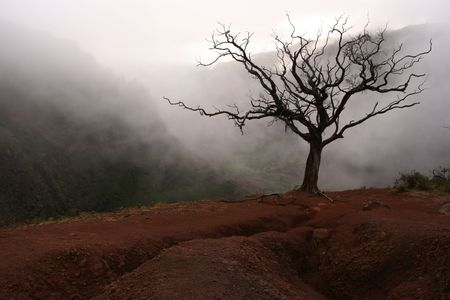 valley below: This tree stands on the edge of a cliff of volcanic dirt overlooking the valley below. Stock Photo