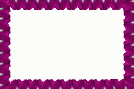 perimeter: Framework of purple flowers  on the perimeter, located on a white background