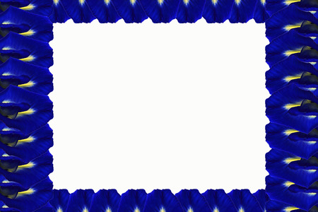 perimeter: Framework of blue flowers  on the perimeter, located on a white background