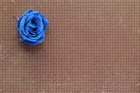 blue roses: old brown paper background blue roses Stock Photo