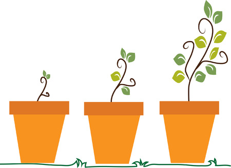 Three phases of plant growth vector image