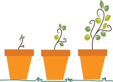 crecimiento planta: Tres fases imagen del vector de crecimiento de las plantas Vectores