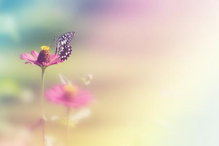Calce farfalla (Papillio Demaleus) sul fiore zinnia con sfocatura dello sfondo. Farfalla sul fiore d'arancio, di raccolta del nettare da fiore, Una farfalla su pollini di fiori
