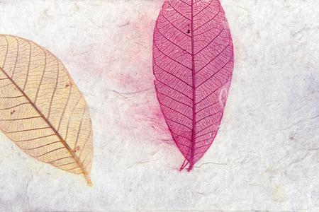 pipal: Close up handmade paper background with leaves, White mulberry paper with dry leafs, peepul or pipal leaf Stock Photo
