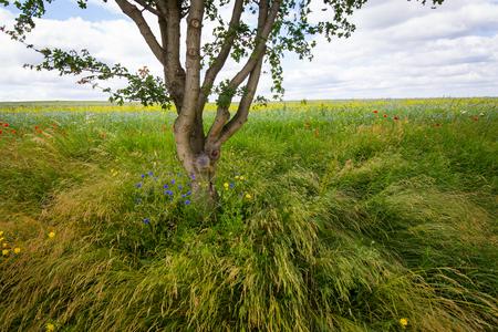 Boom aan de rand van het veld