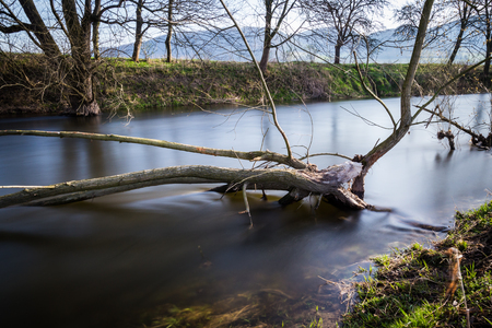 Deadwood in the river Stock Photo