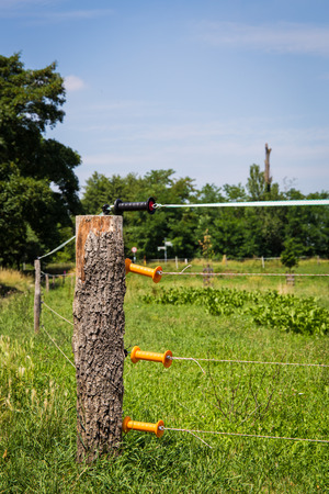 Electric fence for pasture