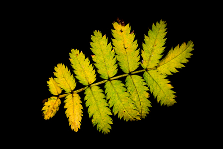 Gelb grüne Blätter im Herbst