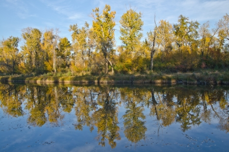 Reflection of the fall trees on still water in Inglewood bird sanctuary in Calgary Stock fotó
