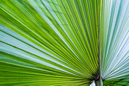 dominant color: The sun shining through the leaf of a palm tree