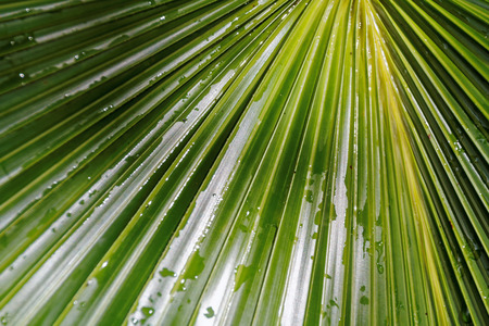 dominant color: Raindrops on the leaf of a palm tree