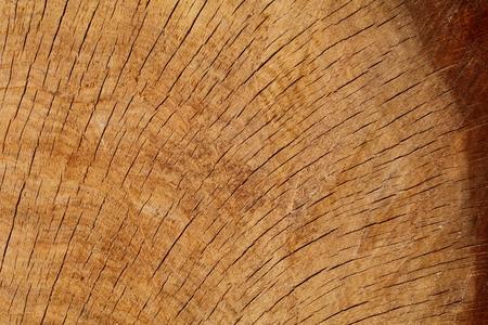 One quarter oak log section