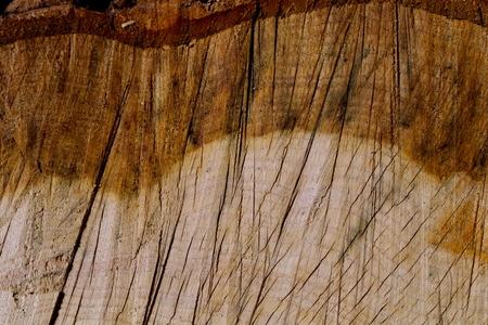 Discolored oak cross section