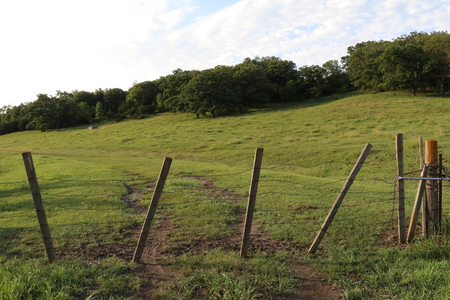 barbed wire fence: Prairie fence