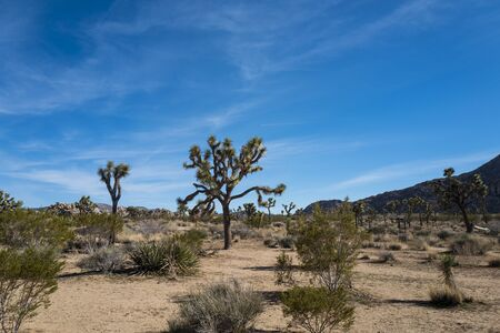 View of Joshua Tree National Park. The park is an American national park in southeastern California, east of Los Angeles. The park is named for the Joshua trees native to the Mojave Desert.