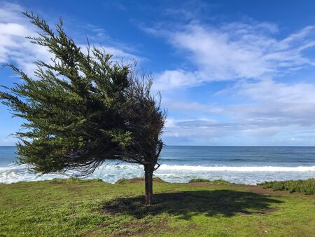 Nature landscape view, the wind blows bend the tree with the ocean in the background.