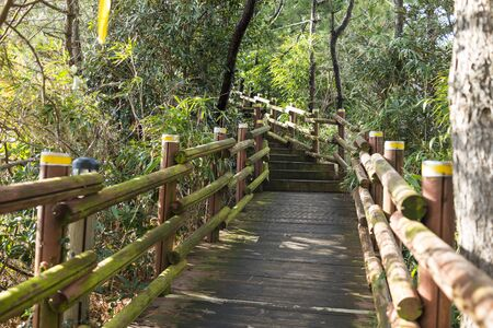 The wooden bridge lead to the park with plants on the both side.