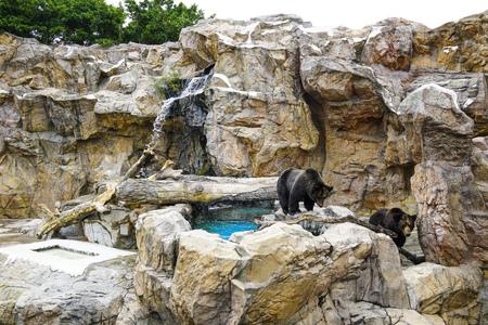 Zhuhai, China, November, 2018: The brown bear (Ursus arctos) at Chimelong Ocean Kingdom.