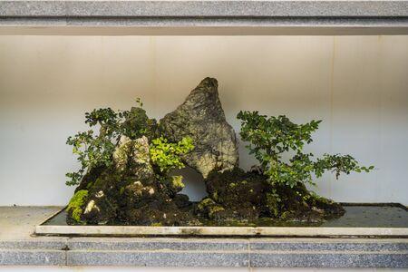 Free style bonsai at the Bonsai Garden at Fairylake Botanical Garden.