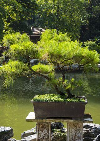 Shenzhen, China. Oct, 2019. The bonsai in the Bonsai Garden at Fairylake Botanical Garden.
