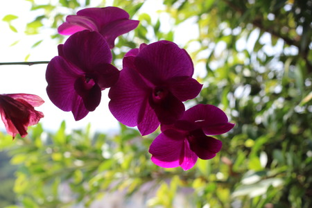 gules: orchid