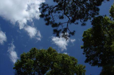 Dark Horizon with several trees