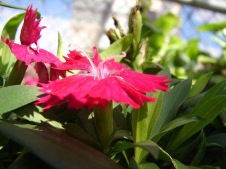 stigmate: Stigma Pollen Grains of a Red Bell Flower