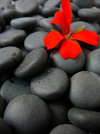 Black stones with a flower on it.