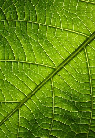 Green leaf texture, organic background.