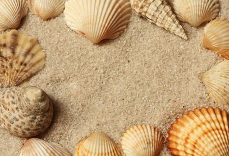 caracolas de mar: Un fotograma de una arena de conchas de mar.