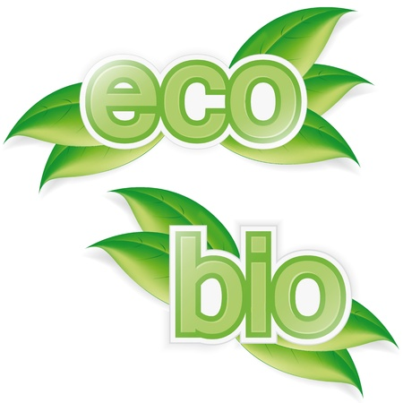 eco  and bio labels with green leaves