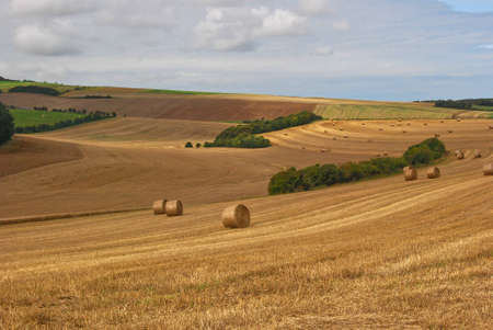 Harvest field in northern France