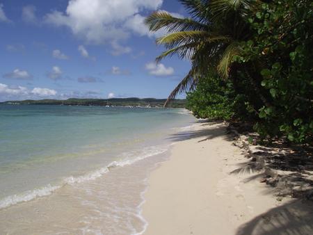 plage: Plage du lagon de Marie Galante Stock Photo