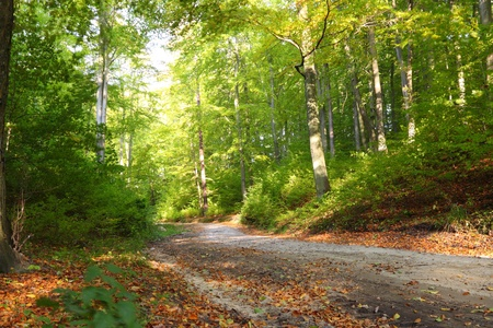 Rural autumn scenery - Fall in forest - park road  Stock Photo