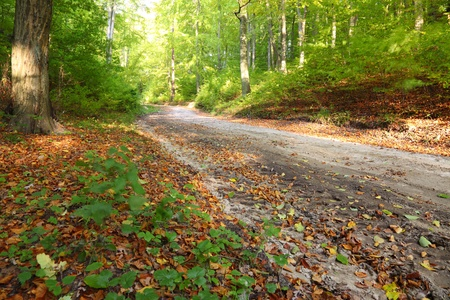Rural autumn scenery - Fall in forest - park road Stock Photo - 10501751