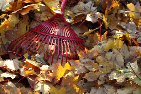 rake and leaves in the garden