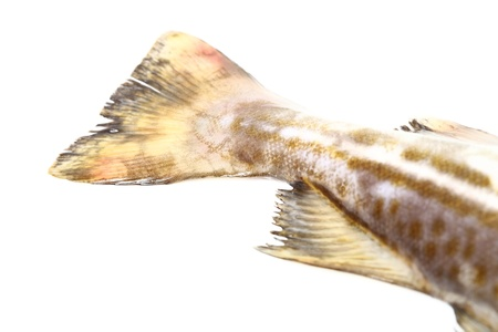 Raw cod fish on white background Stock Photo