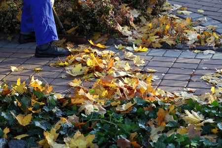 Man raking yellow leaves in the garden  photo