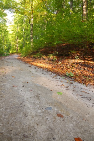 Rural autumn scenery - Fall in forest - park road Stock Photo - 12793240