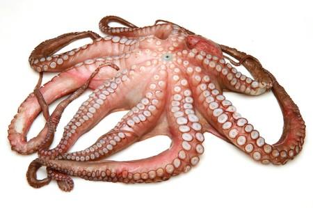 octopus: Pulpo fresco sobre blanco