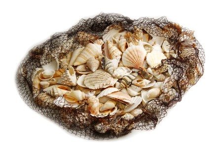 seashell photo