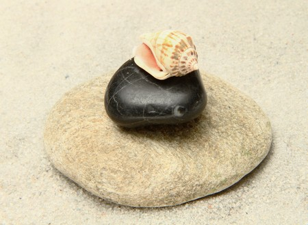 stone and shell  photo