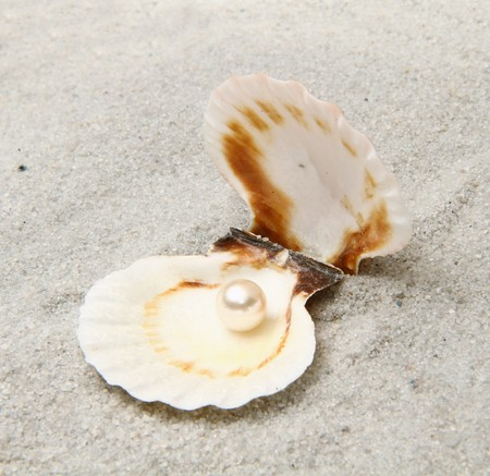 shell with pearl   photo