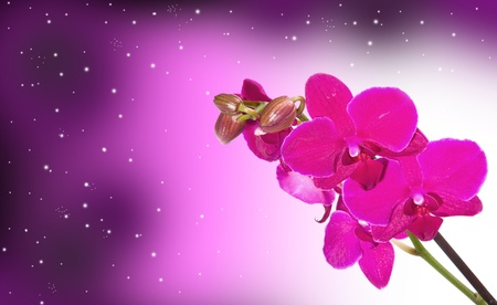 Orchid Flower border design background photo